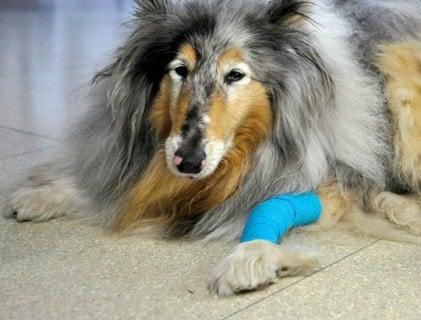 Gauze & Conforming Bandages