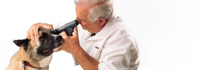 Otoskopy i oftalmoskopy