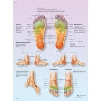 "Wall Chart ""Reflexive Foot Massage"""