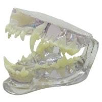 Mâchoire de chien transparente