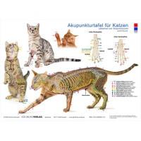Akupunkturtafel «Katze»