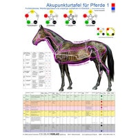 Akupunkturtafel «Pferd»
