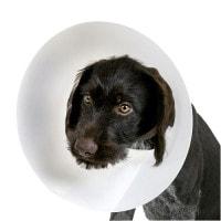 Halskragen für Hunde