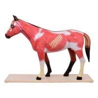 Modelo desmontable de caballo