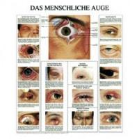 Planche « les yeux »
