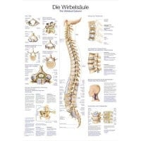 "Wall Chart ""The Vertebral Column"""