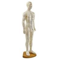 Modèle d'acupuncture