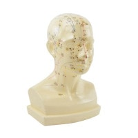 «Acupuncture Head» Model