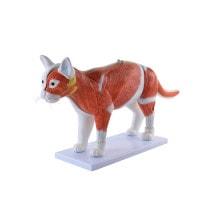 Zerlegbares Modell «Katze»
