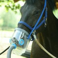 Air-one - Inhalateur pour les chevaux