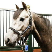 Horse Control System