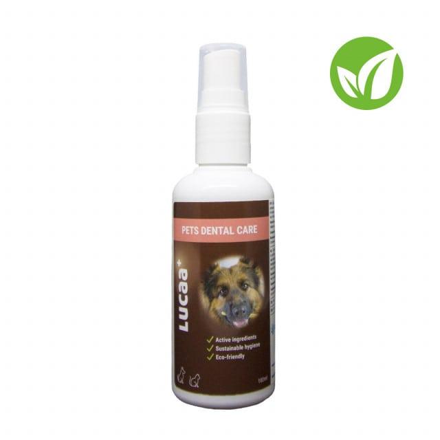 Schutz und Pflege der Zähne von Hunden und Katzen
