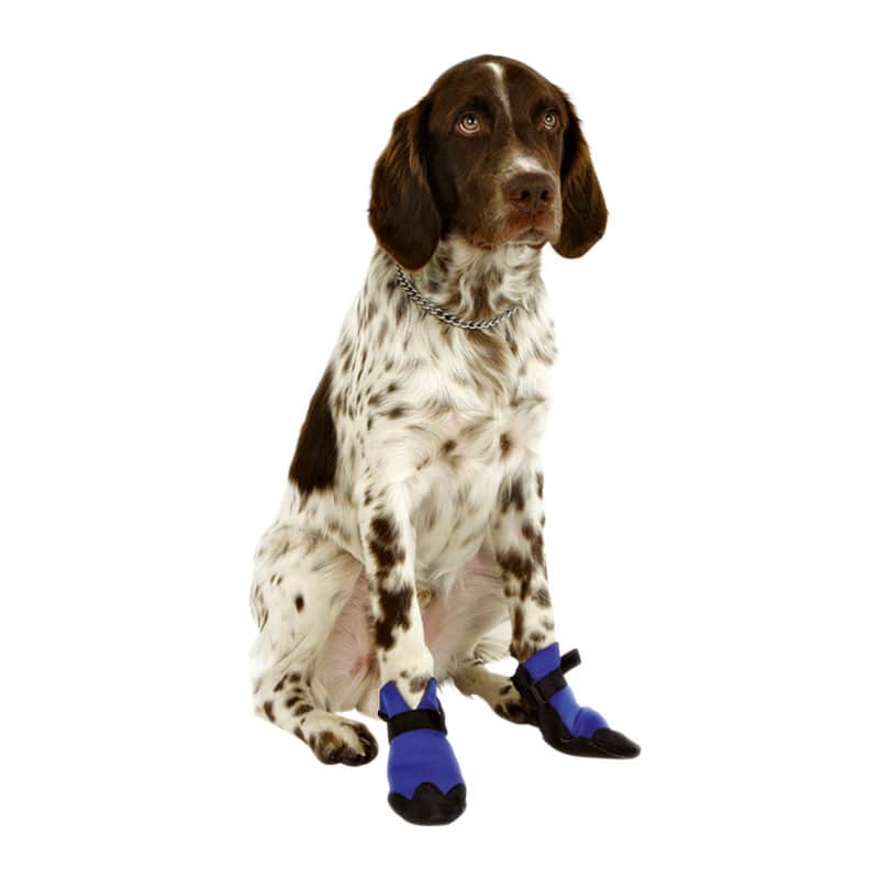 https://static.praxisdienst.com/out/pictures/generated/product/1/800_800_100/kerbl_hundeschuhe_bootie_190736_1.jpg