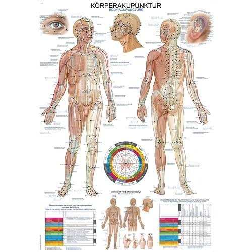 "Wall Chart ""Human Acupuncture"""