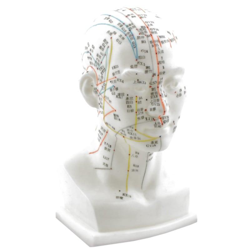 Hochwertiges Kopf-Akupunkturmodell mit Akupunkturpunkten und Meridianen