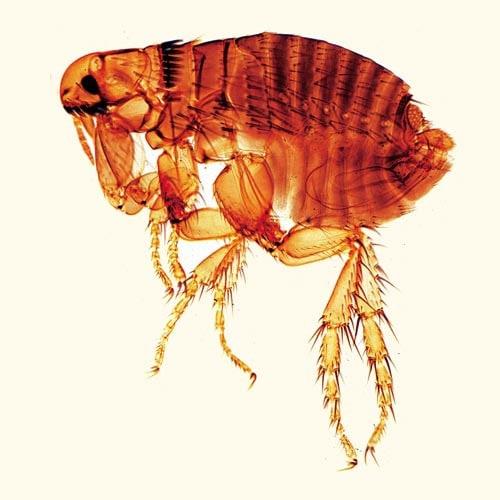 25 Präparate im Set - Parasitologie