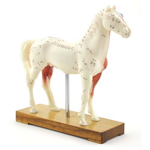 """Horse"" Acupuncture Model"