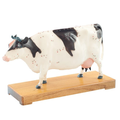 Cow Acupuncture Model