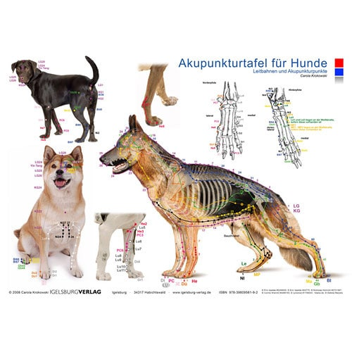 "Acupuncture board ""dog"""