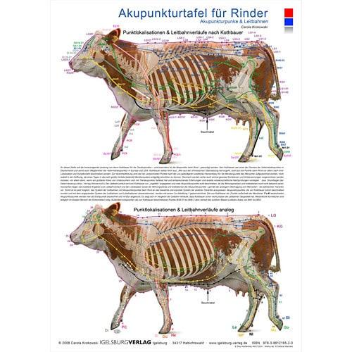 """Akupunkturtafel """"Rinder"""" mit kolorierter Darstellung im A1-Format"""