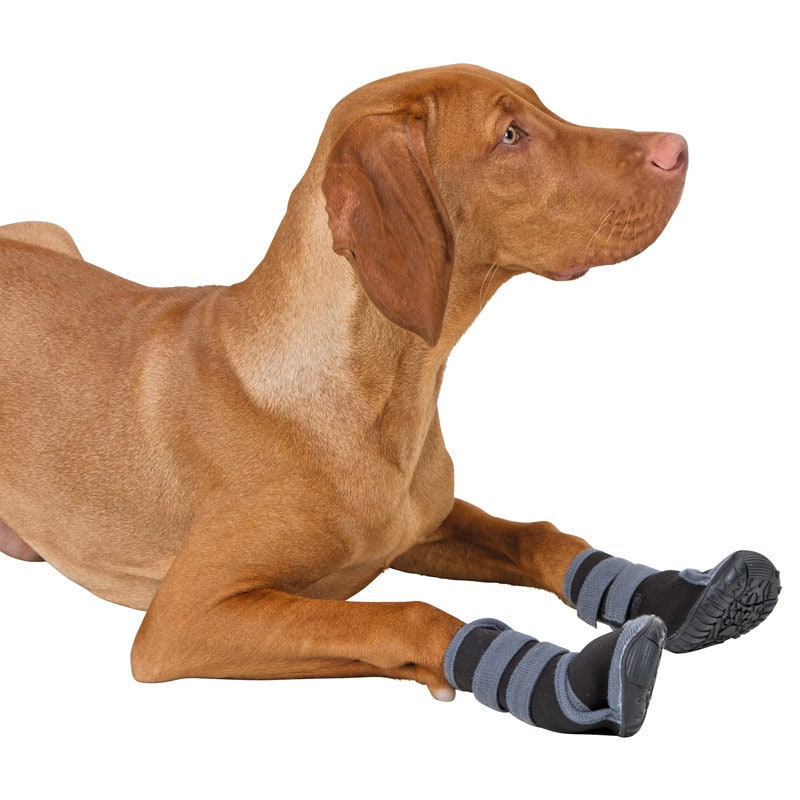 Dog Shoes «Active»