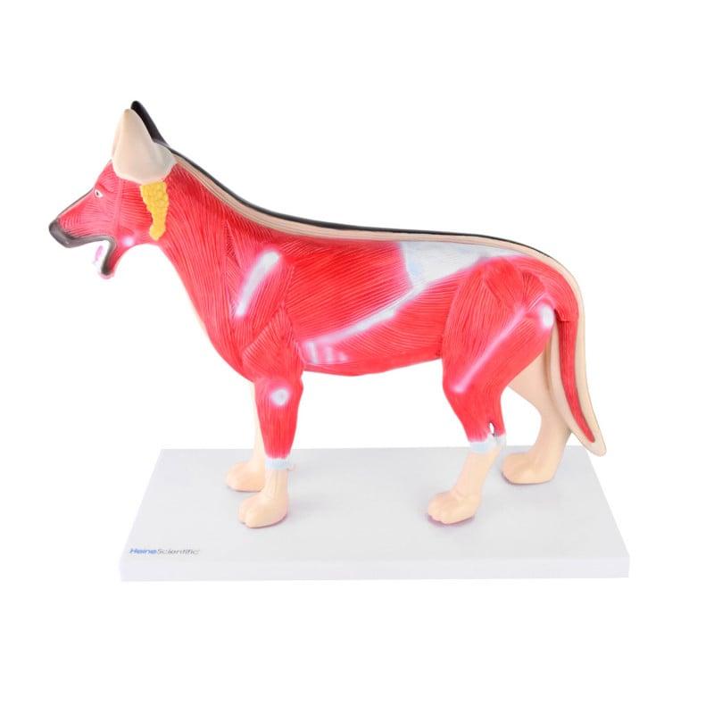 Modell «Hund», Maße 36 x 15 x 34 cm