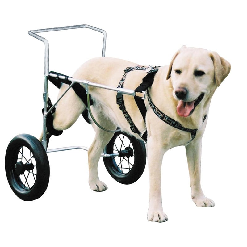 Canis mobile, Dog Wheelchair
