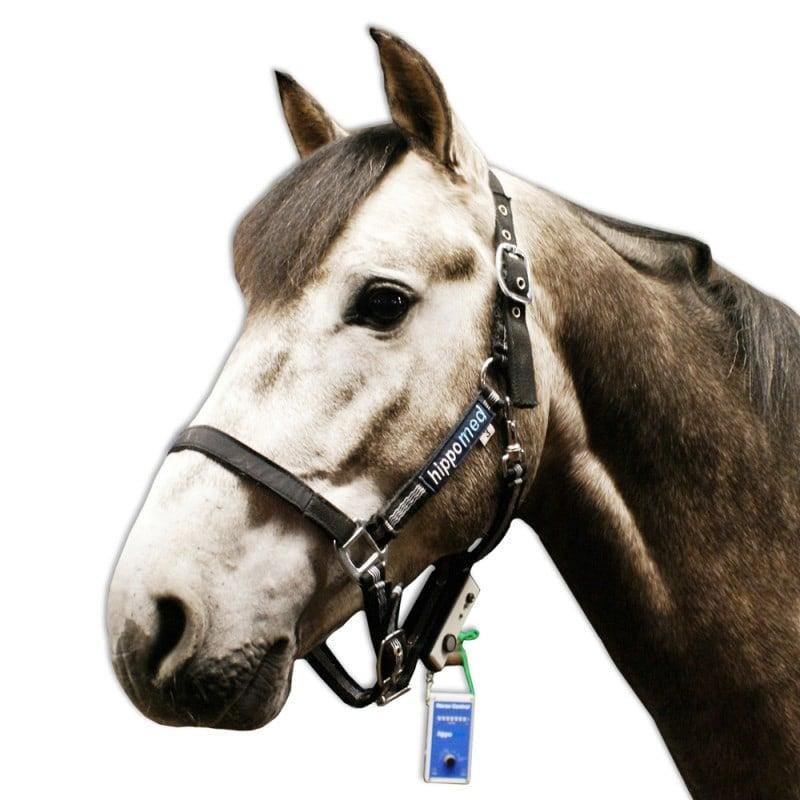Hippomed Horse Control System zur Schmerzüberwachung bei Pferden