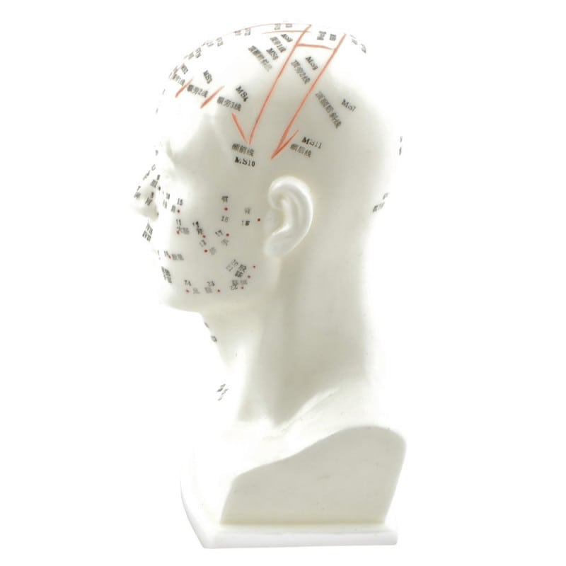 Das Akupunkturmodell eignet sich zur Demonstration oder zu Schulungszwecken