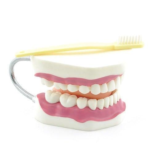 Modelo dental con cepillo de dientes