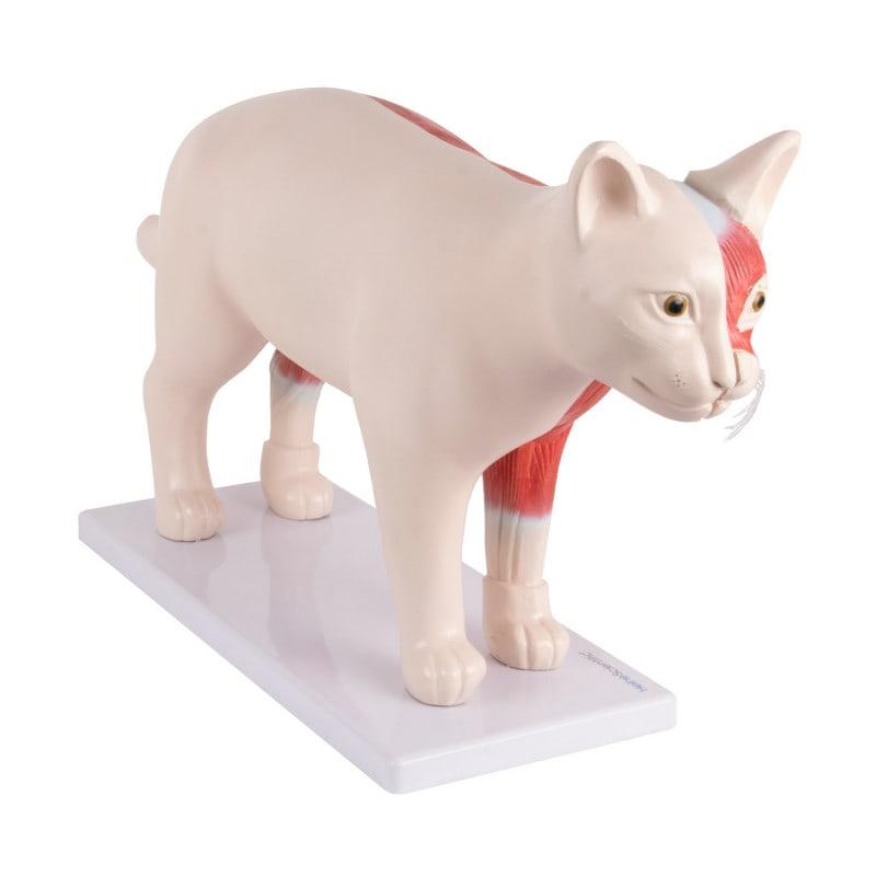 Eine Hälfte des Katzenmodells ist auf dem Sockel befestigt