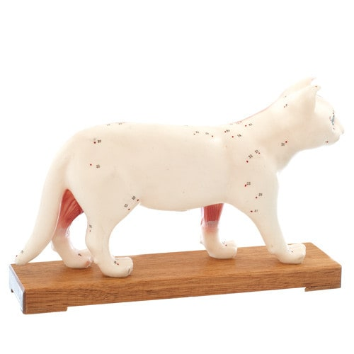 """Cat"" acupuncture model"