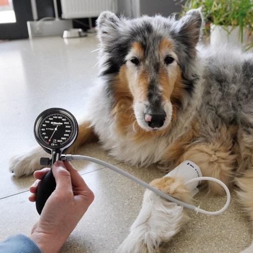 e-mega Aneroid-Blutdruckmessgerät