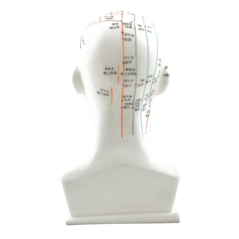 Head Acupuncture Model