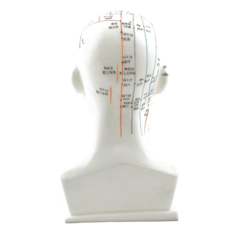 Akupunkturpunkte in europäischer Schrift und in chinesischen Schriftzeichen