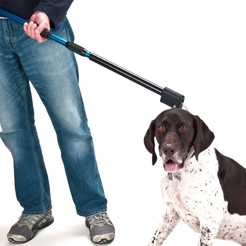 Automatic dog catch pole