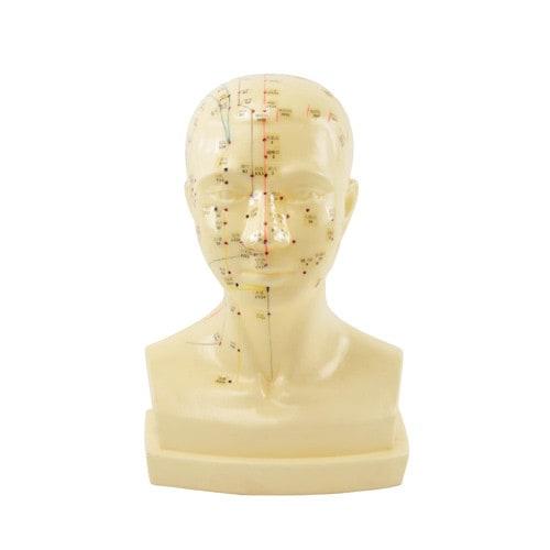 Model akupunktura głowy