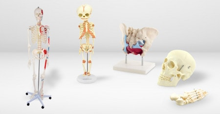Patient Education with Skeletal Models
