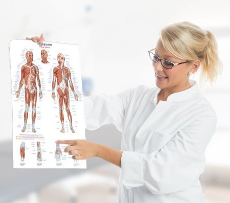 Medical Wall Charts for Patient Education