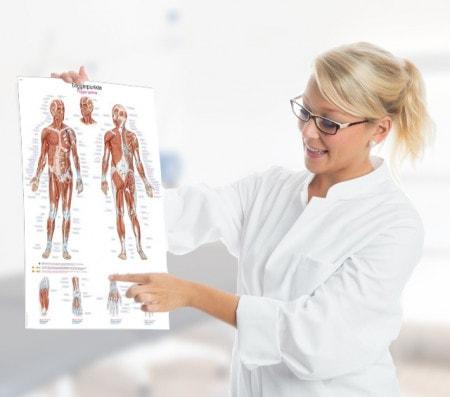 Anatomische Lehrtafeln für Patientenschulung oder Ausbildung