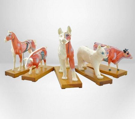 Modèles d'acupuncture pour les vétérinaires
