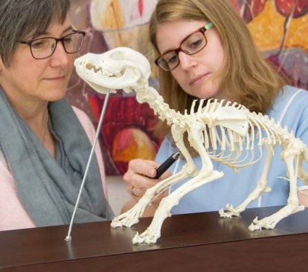 Animal Skeleton Models