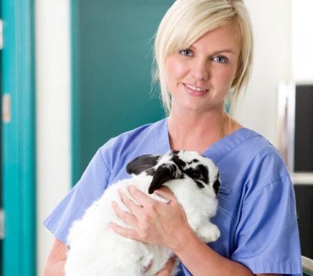 Bekleidung für den Tierarzt