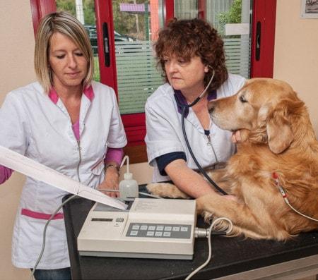 Veterinär-EKG-Geräte