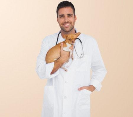 Herrenbekleidung für Tierärzte