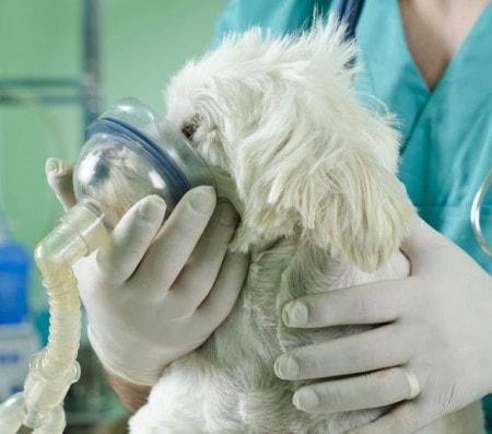 Inhalation bei Tieren