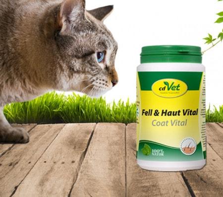 Suplementos alimenticios para gatos