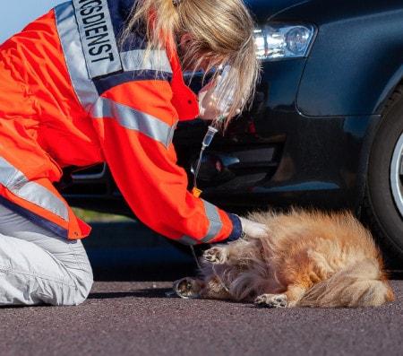 Notfallversorgung von Tieren