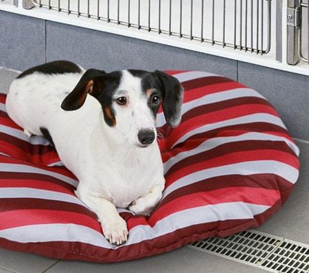 Textilien für die Tierarztpraxis