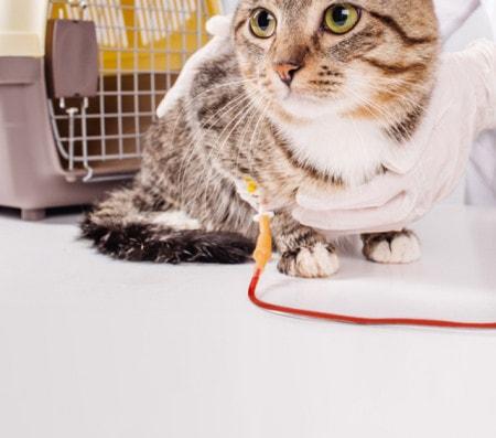 Transfusionsgeräte für die Tiermedizin